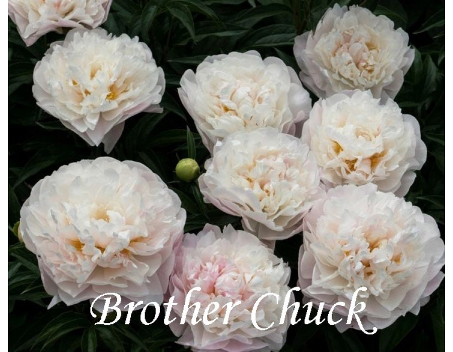 Brother Chuck