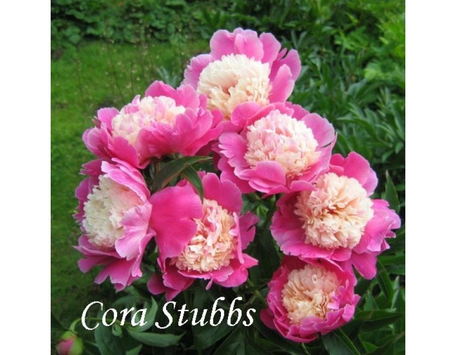 Cora Stubbs