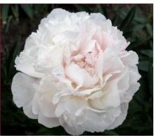 Marilla Beauty