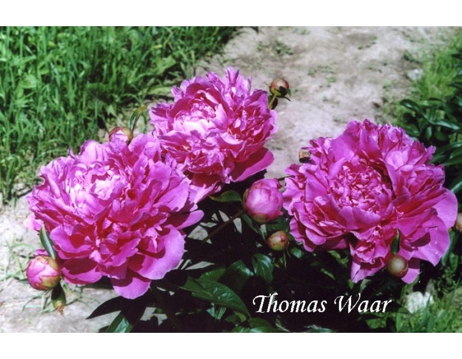 Thomas Waar